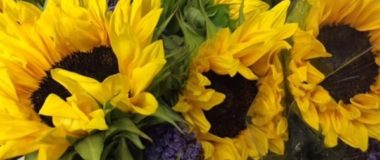 ABC15 Segment Flowers for Food Thanksgiving Food Drive & Free Sunflower Giveaway
